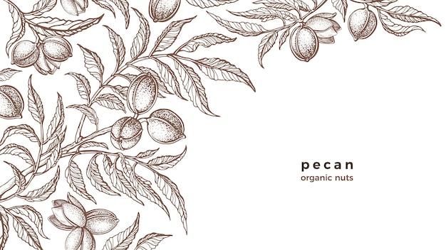 Branche de noix de pécan plante vintage botanique croquis dessinés à la main aliments protéinés biologiques sains
