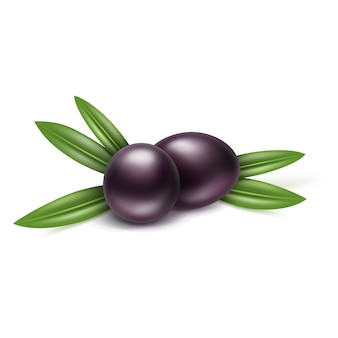Branche d'olives noires avec des feuilles sur fond blanc