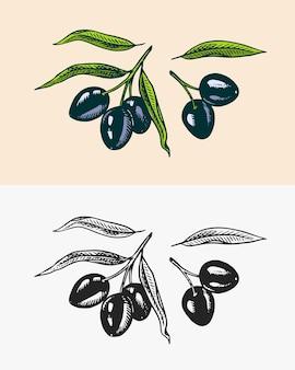 Branche d'olivier d'arbres ingrédient d'huile produit végétarien biologique brindilles et fruits de plantes vertes