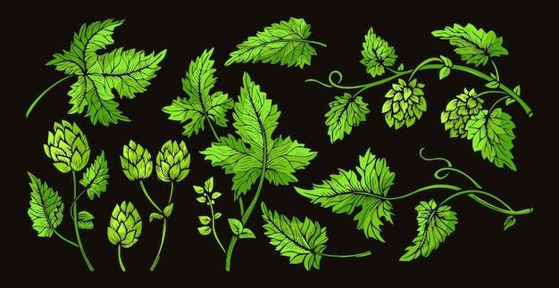 Branche de plante de houblon feuilles croquis ensemble vert herbe