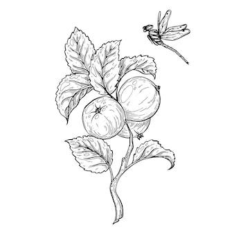 Une branche avec des pommes et une libellule volante
