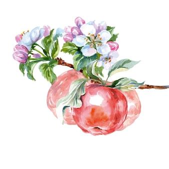 Branche de pommier aquarelle avec fleurs et pommes. fond de printemps. illustration vectorielle