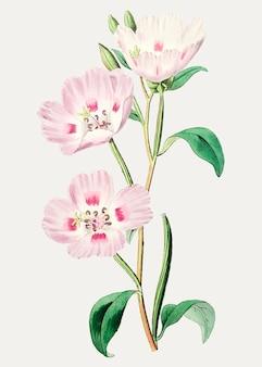 Branche de primevère rose
