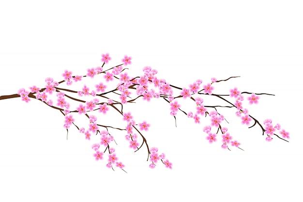 Branche de printemps horizontale de fleurs de cerisier