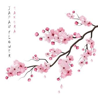 Branche réaliste de Sakura