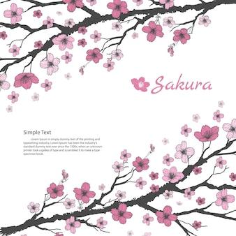 Branche de sakura avec des fleurs roses douces sur fond blanc.