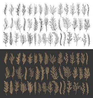 Branche de silhouette abstraite laisse la nature définie collection dessinés à la main.