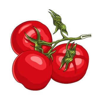 Branche avec trois tomates mûres