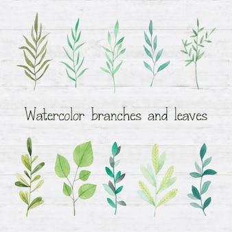 Branches d'aquarelle et feuilles