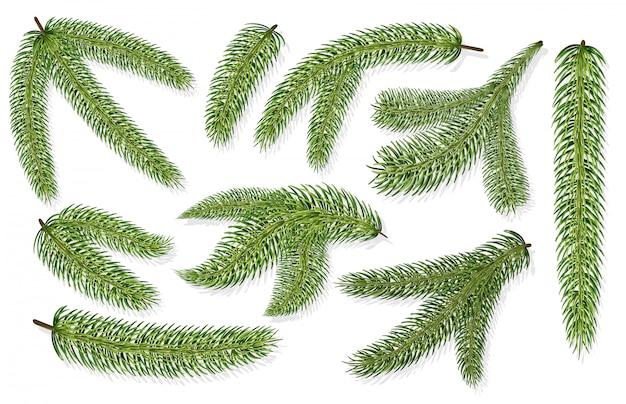 Branches d'arbres de noël
