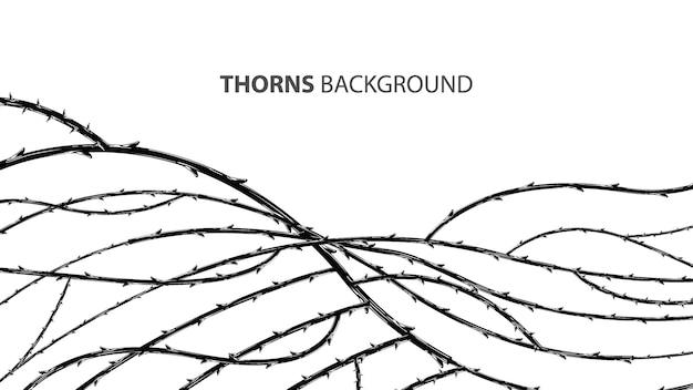 Branches de blackthorn avec fond élégant d'épines.