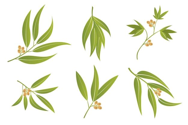 Branches et brindilles d'eucalyptus de vecteur feuilles vertes sertie de baies isolées sur fond blanc