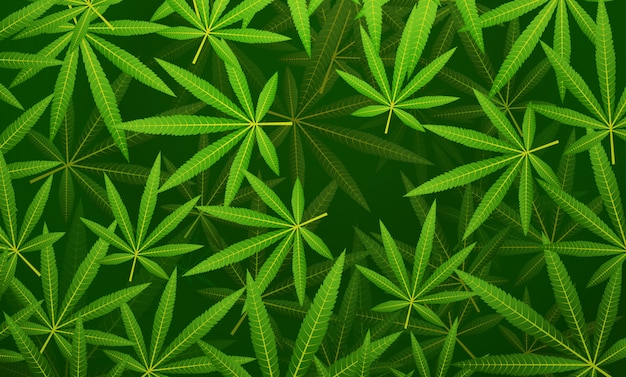 Branches de chanvre vert cannabis marijuana laisse fond floral horizontal plat