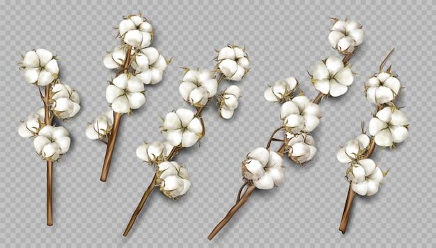 Branches de coton réalistes avec fleurs et tiges
