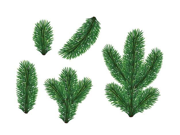 Branches d'épinette.