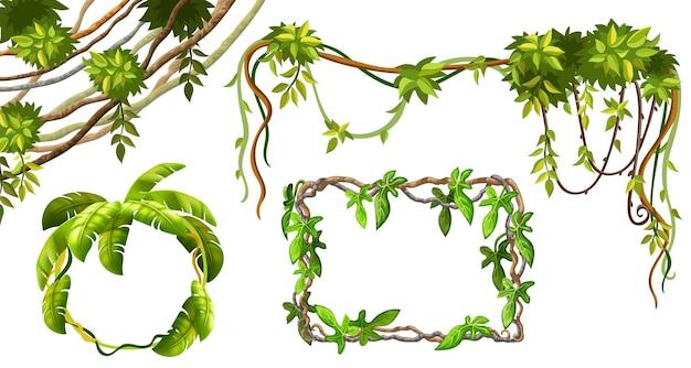 Branches et feuilles de liane.
