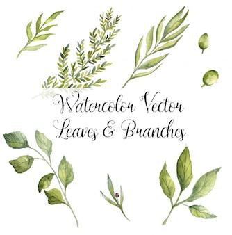 Branches et feuilles de vecteur aquarelle