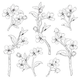 Branches de fleurs botaniques dessinés à la main sur fond blanc.