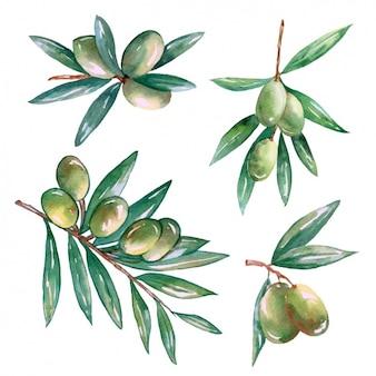 Branches d'olivier décoratifs dessins