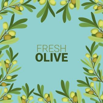 Branches d'olivier fraîches