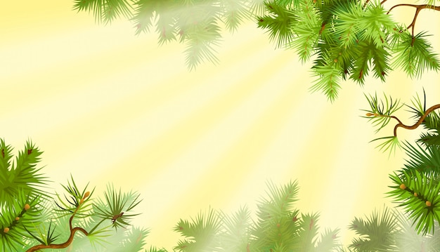 Branches de pin. matinée ensoleillée.