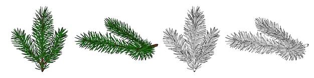 Branches de sapin