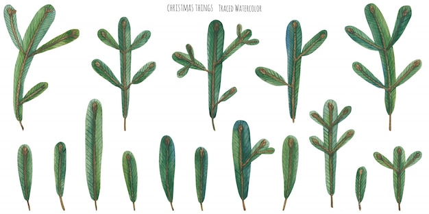 Branches vert aquarelle de noël