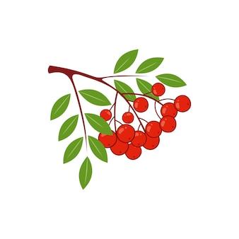 Un brin de sorbier rouge isolé sur fond blanc. illustration de baies vectorielles.