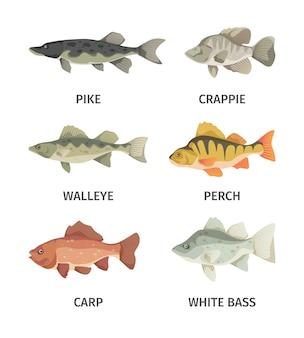 Le brochet gris prédateur et de larges nageoires sous l'eau wallyey carpe rouge profond perche blanche et commune