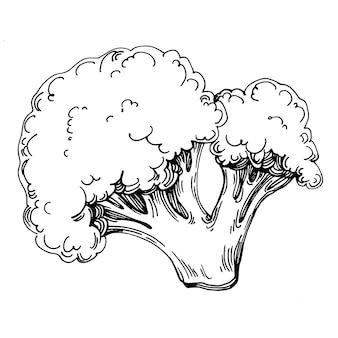 Brocoli Isolé Illustration Dessinée à La Main. Style Gravé Végétal. Croquis De Dessin De Nourriture Végétarienne. Produit Du Marché Fermier. Le Meilleur Pour La Conception De Logo, Menu, étiquette, Icône, Timbre. Vecteur Premium