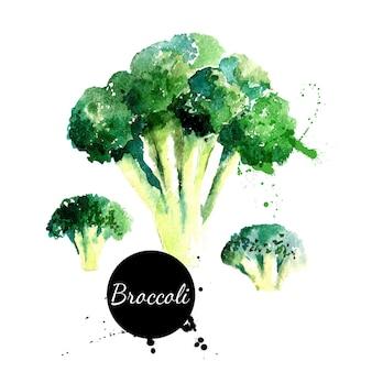 Brocoli. peinture à l'aquarelle dessinée à la main sur fond blanc. illustration vectorielle