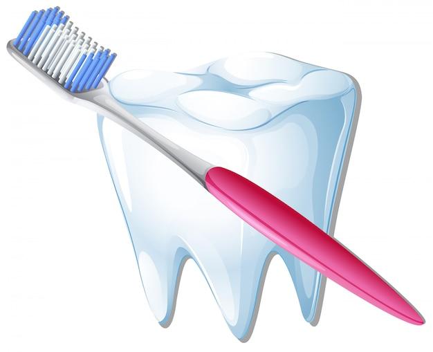 Une brosse à dents et une dent