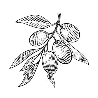 Brunch aux olives dans l'élément de style de gravure pour affiche, carte, bannière. illustration