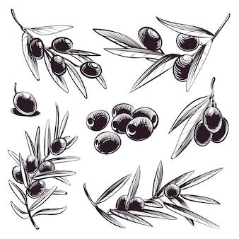 Brunchs d'arbres aux olives et aux feuilles.