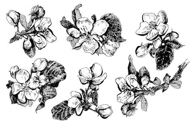 Brunchs de pommiers en fleurs