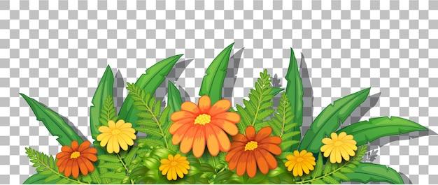 Buisson de fleurs avec des feuilles sur fond transparent