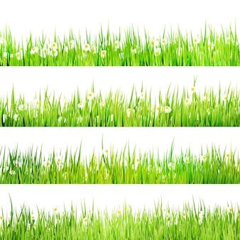 Buisson luxuriant d'herbe verte avec des camomilles sur blanc.