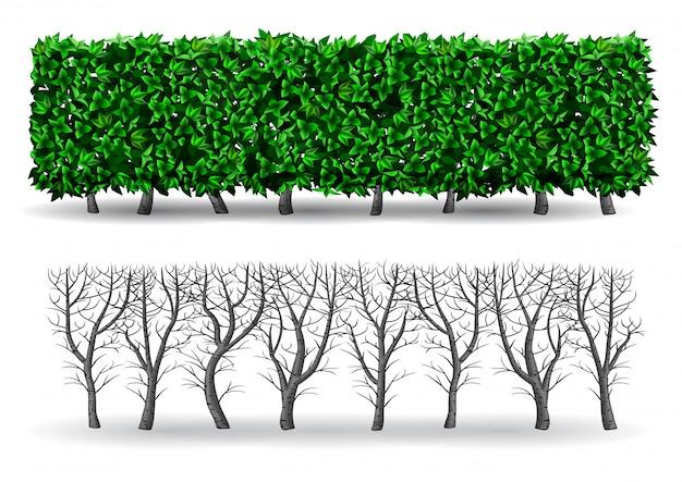 Buisson sous forme de haie verte