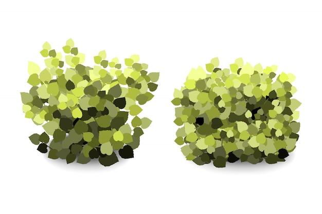 Buissons de jardin vert abstrait