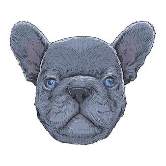 Bulldog français aux yeux bleus