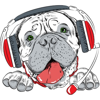 Bullmastiff de chien de vecteur avec casque téléphonique