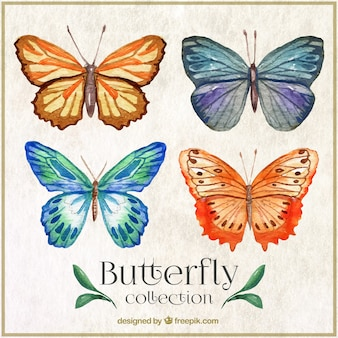 Butterflyes aquarelle avec ornements abstraits