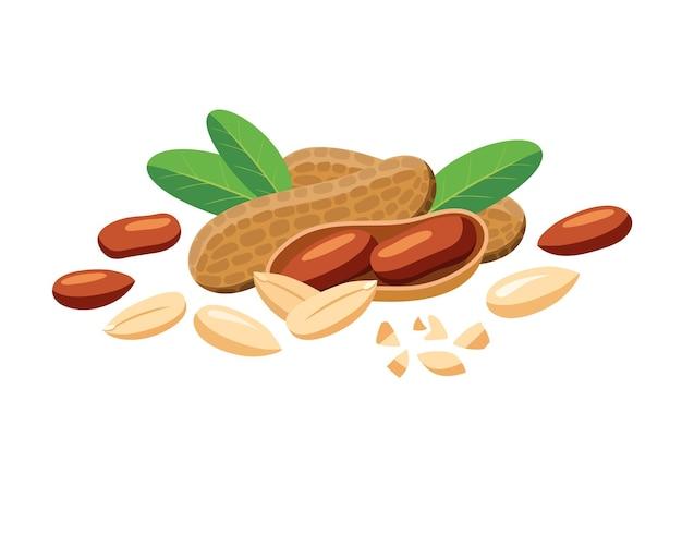 Cacahuètes vectorielles entières et morceaux en style cartoon pour modèle d'étiquette