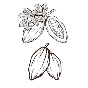 Cacao ou chocolat dessin à la main illustration