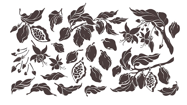 Cacao mis éléments naturels