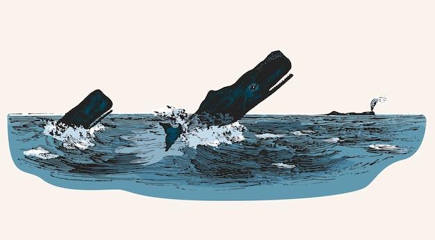 Cachalot en attaquant un bateau de pêche