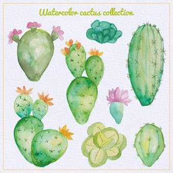 Cactus aquarelle et ensemble succulent