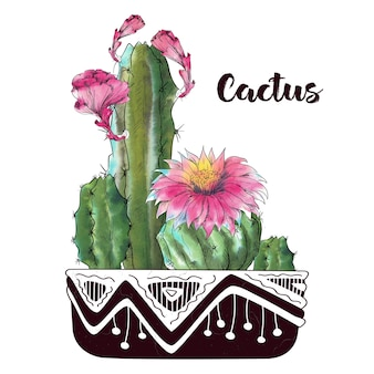 Cactus aquarelle isolé sur fond blanc