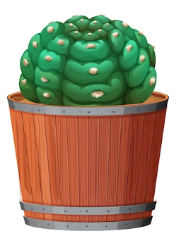 Un cactus dans le pot