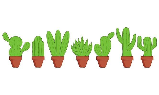 cactus dessiné à la main avec pot